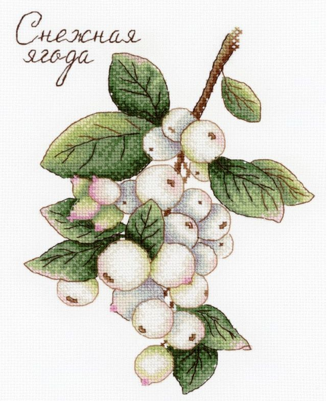 Snowberries / Hóbogyó